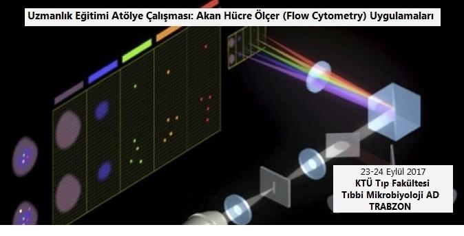 Akan Hücre Ölçer (Flow Cytometry) Uygulamaları