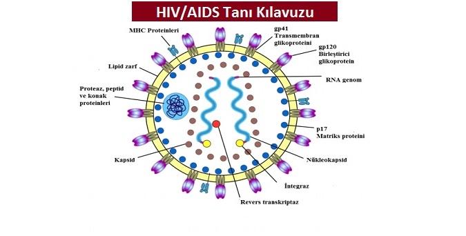 HIV/AIDS Tanı Kılavuzu 2018